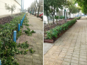 jardineros podas